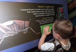 Child investigating a insect's eyed view at CONKERS
