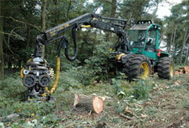 Woodland management in action